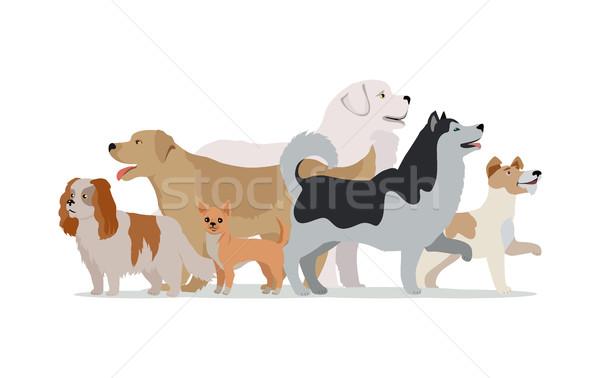 Foto d'archivio: Raccolta · diverso · cani · isolato · bianco · husky