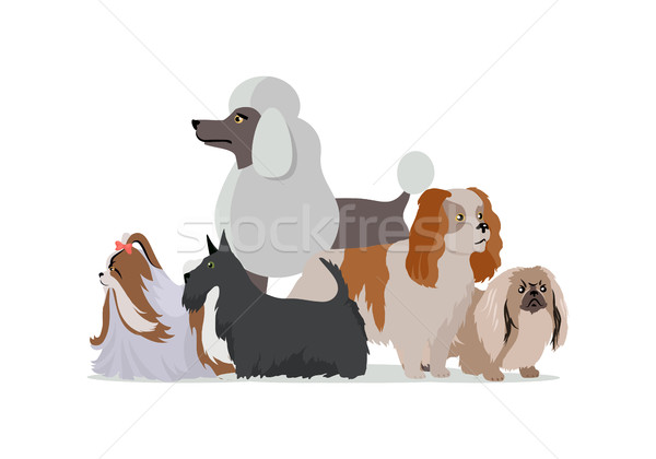 Dog Grooming Banner. Long Haired Dog Breeds Stock photo © robuart