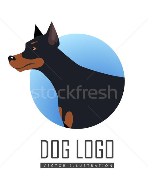 犬 ベクトル ロゴ スタイル デザイン ドーベルマン犬 ストックフォト © robuart