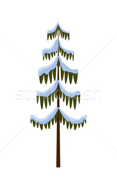 Isolated Spruce Covered with Snow on White. Winter Stock photo © robuart