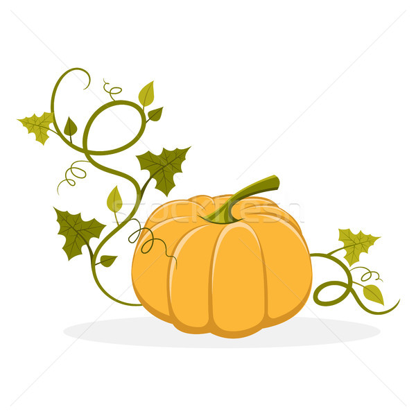 Ripe Pumpkin with Swirly Leafy Stem Illustration Stock photo © robuart