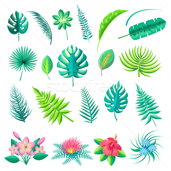 Tropical Leaves and Flowers Vector Illustration Stock photo © robuart