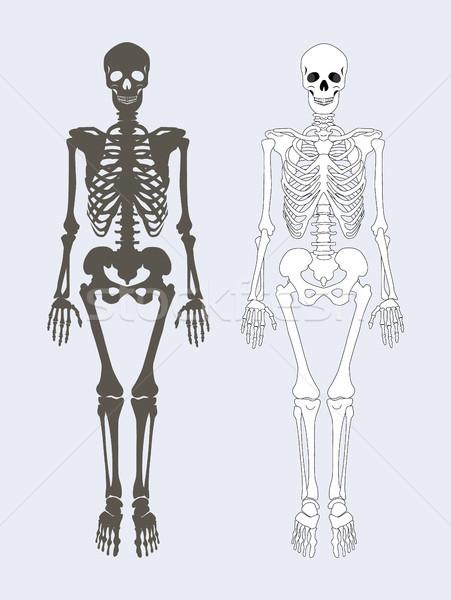 Szkielet ludzi ciało zestaw czarno białe kolory Zdjęcia stock © robuart
