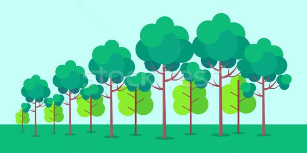Poszter erdő fák békés zöld bokrok Stock fotó © robuart