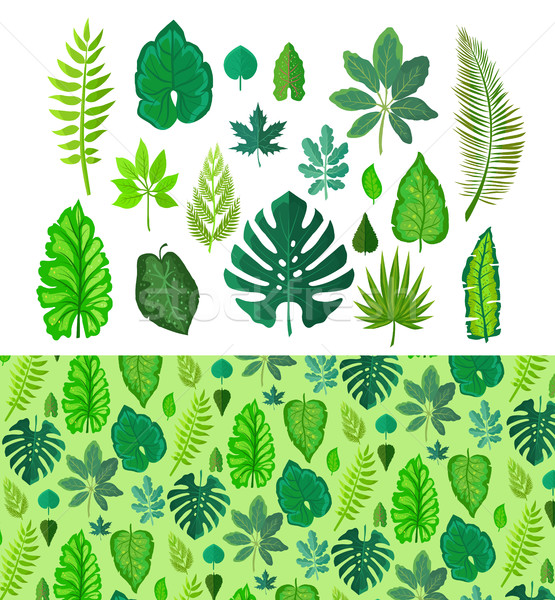 Stock photo: Set of Tropical Leaves. Collection  Green Leafs.