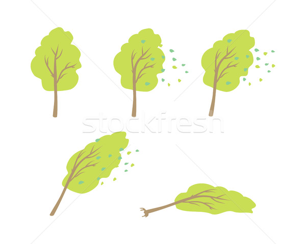 Strong Wind Topple Tree Vector in Flat Design Stock photo © robuart