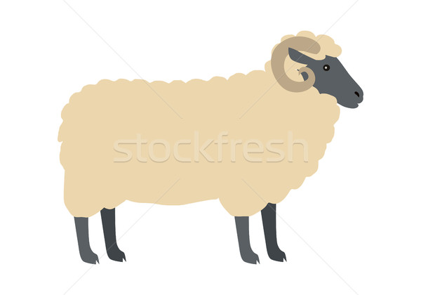 Ram with Wool Vector Flat Design Illustration Stock photo © robuart