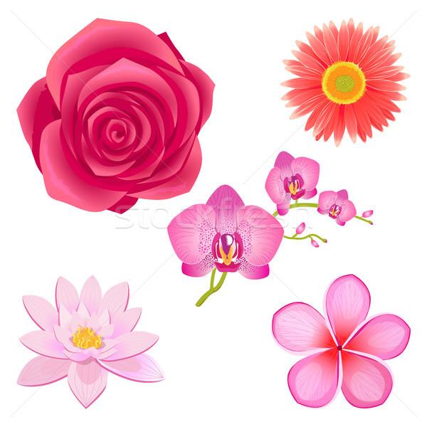 すごい ピンク 花 孤立した イラスト セット ストックフォト © robuart