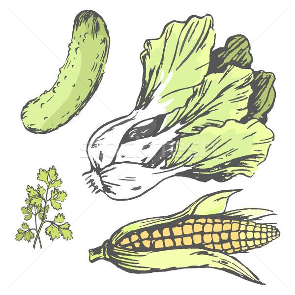 Vegetables at Random Colorful Graphic Illustration Stock photo © robuart