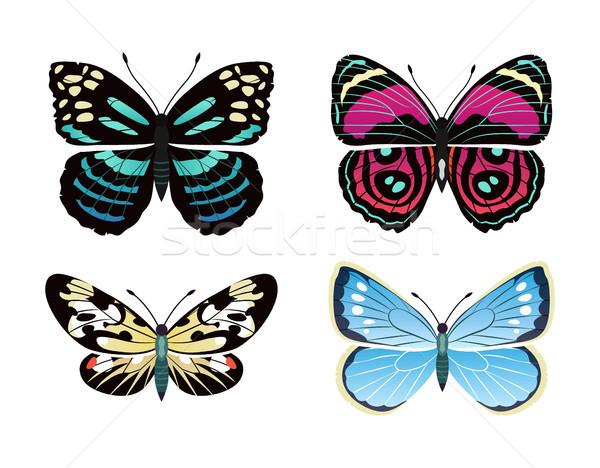 Сток-фото: коллекция · бабочки · бабочка · изолированный · белый · семьи