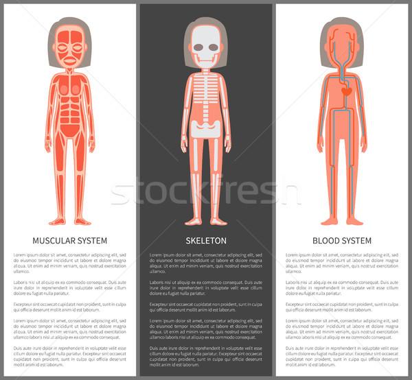 Gespierd bloed skelet silhouet vrouwelijke intern Stockfoto © robuart