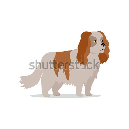 Cocker Spaniel Dog Breed Flat Design Illustration Stock photo © robuart