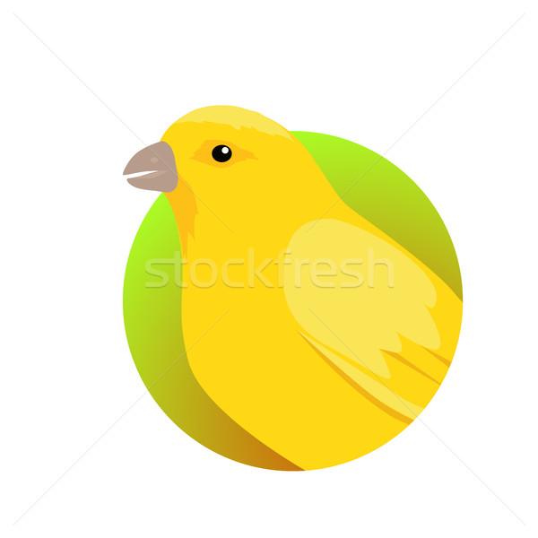 Canário projeto vetor doméstico ave canora estilo Foto stock © robuart