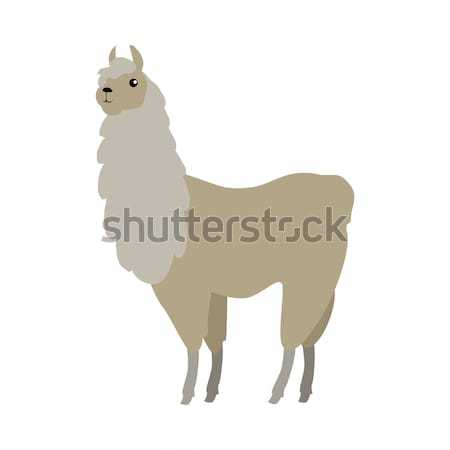 Lama Vector Illustration in Flat Design Stock photo © robuart