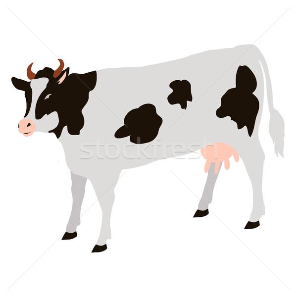 Stockfoto: Volwassen · koe · zwarte · geïsoleerd · vector