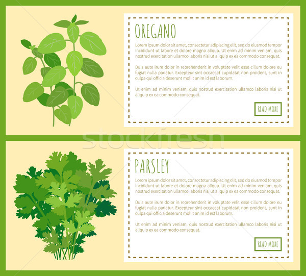 Oregano and Parsley Thick Bunches on Banners Set Stock photo © robuart