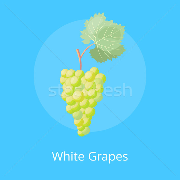 White Grapes Poster with Bunch White Gape Vector Stock photo © robuart