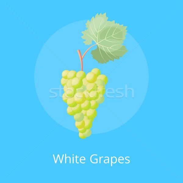 Branco uvas cartaz monte vetor uva Foto stock © robuart