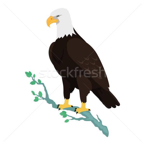 Kaal adelaar ontwerp vector vogels wildlife Stockfoto © robuart