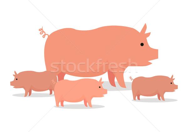 Pigs Flat Design Vector Illustration. On White. Stock photo © robuart