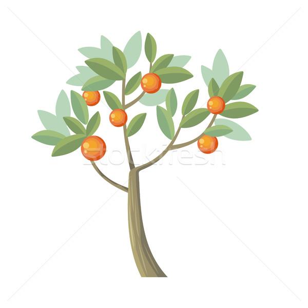 Vector Tree. Orange Isolated on White. Vector Stock photo © robuart