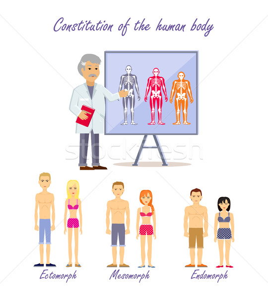 Constitution of the Human Body Types Stock photo © robuart