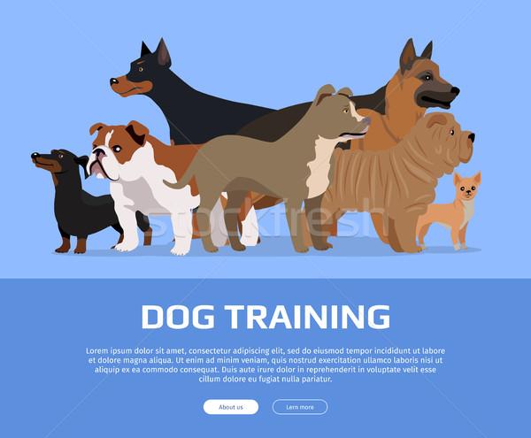 犬の訓練 スタイル ベクトル ウェブ バナー グループ ストックフォト © robuart