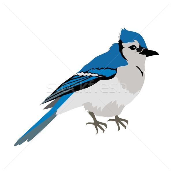 Blue Jay Flat Design Vector Illustration Stock photo © robuart