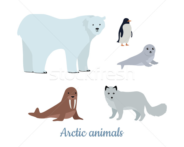 Set of Arctic Animals Illustrations in Flat Design Stock photo © robuart