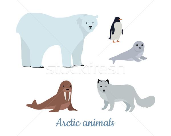 набор Арктика животные дизайна Сток-фото © robuart