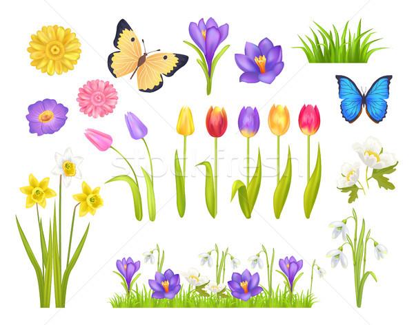 Stok fotoğraf: çiçekler · kelebekler · ayarlamak · toplama · elemanları