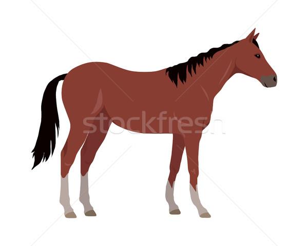 Ló terv fehér lábak vektor háziállat Stock fotó © robuart