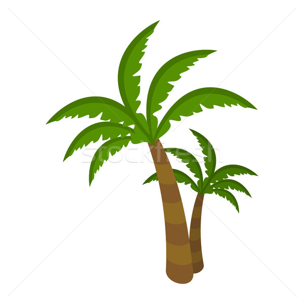 Palm Tree Isolated on White Background. Arecaceae Stock photo © robuart