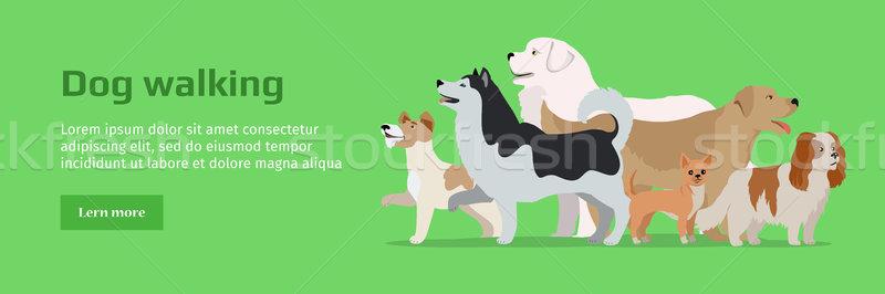 Professionele hond lopen dienst banner groep for Professional dog walking service