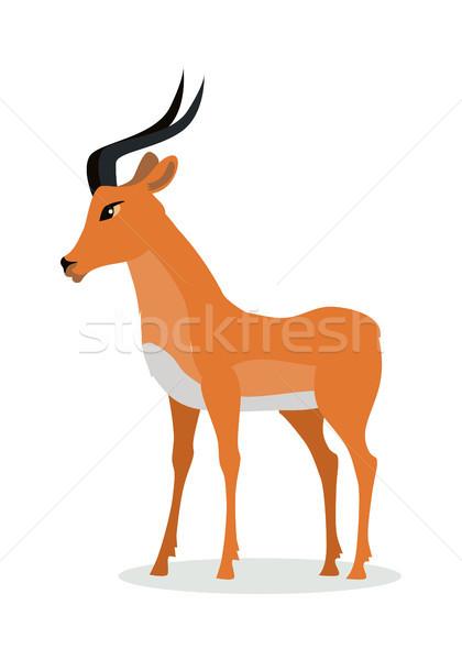 Antelope Impala Cartoon Icon in Flat Design Stock photo © robuart