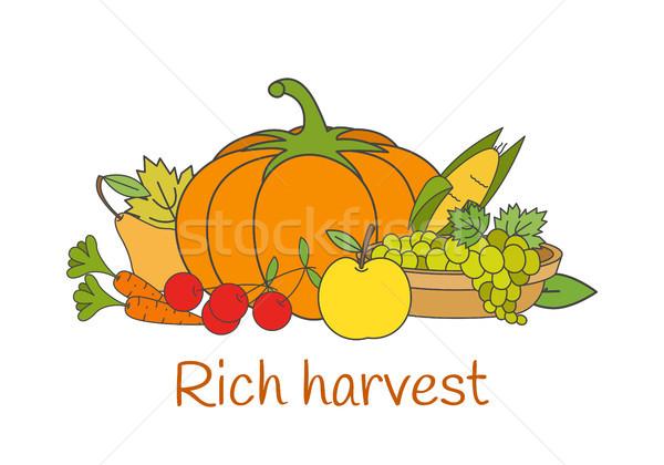 Ricca raccolto vettore verdura autunno gruppo Foto d'archivio © robuart