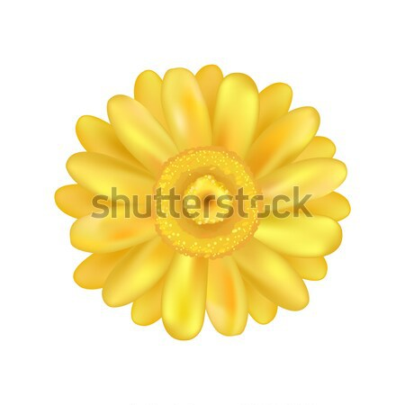 Yellow Zinnia Daisy Flower Vector Illustration Stock photo © robuart