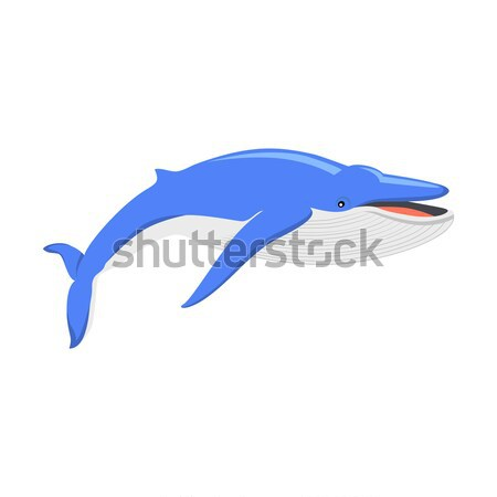 Blue Whale Isolated on White Background Stock photo © robuart