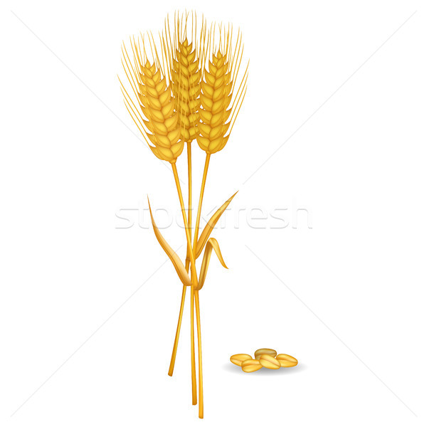 Wheat Ears near Grain pile Isolated on White Stock photo © robuart