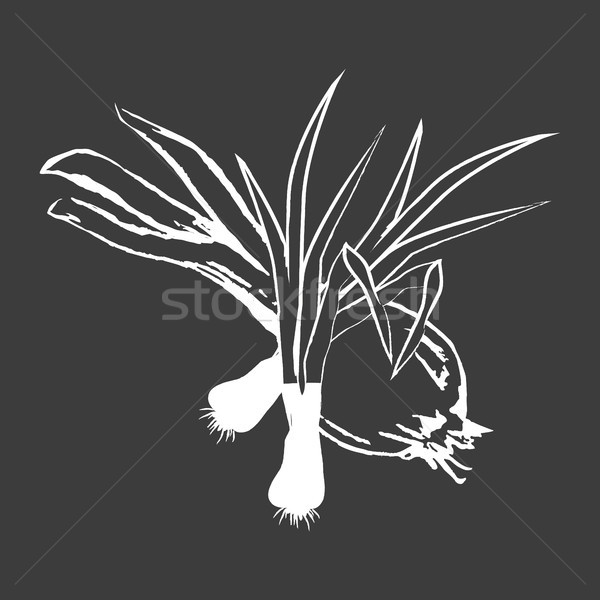 Leek Bunches and Bulb Onion Isolated White Outline Stock photo © robuart