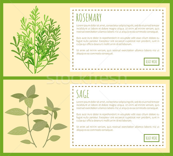 Rosemary and Sage Green Plant Spicy Condiments Stock photo © robuart