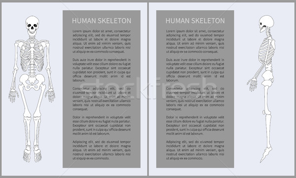 Human Skeleton Posters Set Vector Illustration Stock photo © robuart