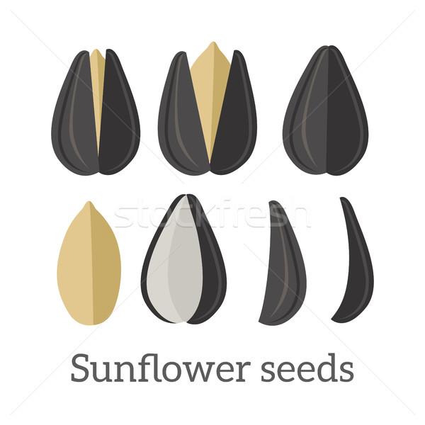 Sunflower Seeds Vector Illustration in Flat Design Stock photo © robuart