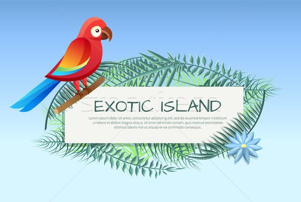 Egzotikus sziget poszter papagáj levelek szöveg Stock fotó © robuart
