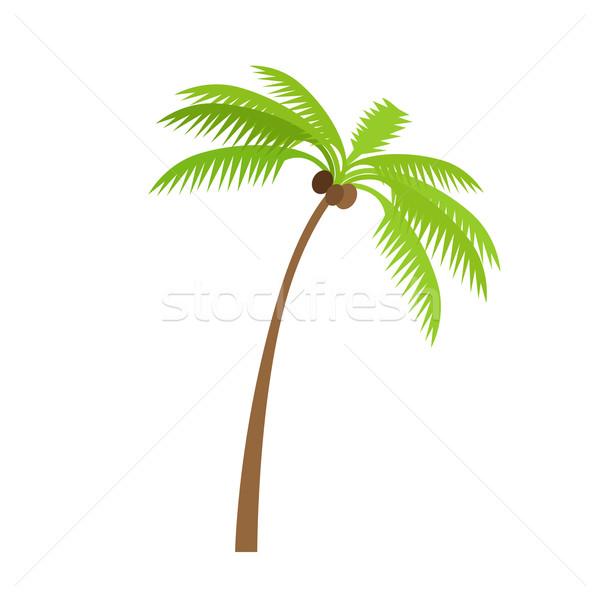 пальма дерево кокосового изолированный Сток-фото © robuart