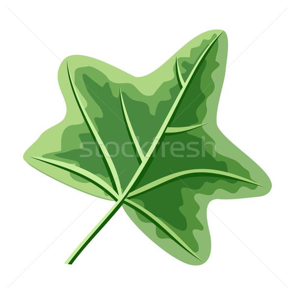 Lierre feuille verte isolé blanche gui peuvent Photo stock © robuart