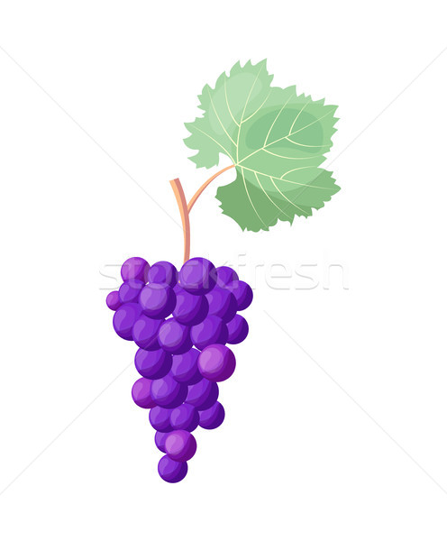 Wine Grapes Icon Vector Illustration on White Stock photo © robuart