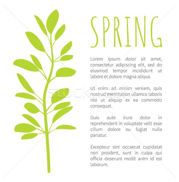 Wiosną info plakat owalny pozostawia oddziału Zdjęcia stock © robuart