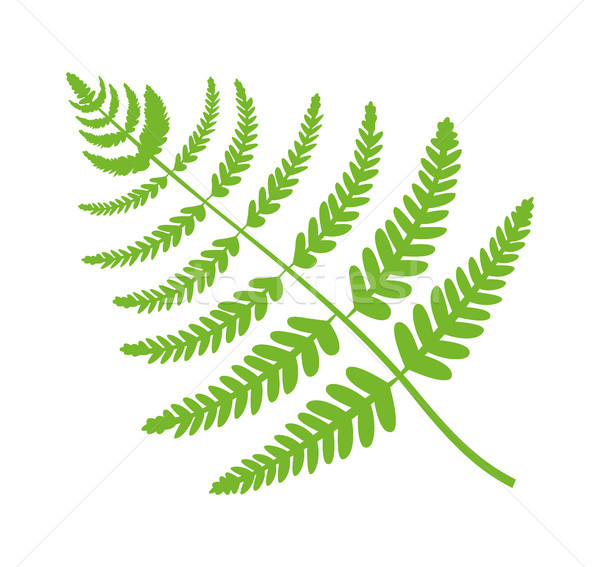 Fern Plant Big Green Leaf Vector Illustration Stock photo © robuart