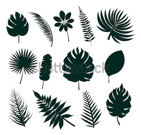 Leaf Collection Silhouette Vector Illustration Stock photo © robuart